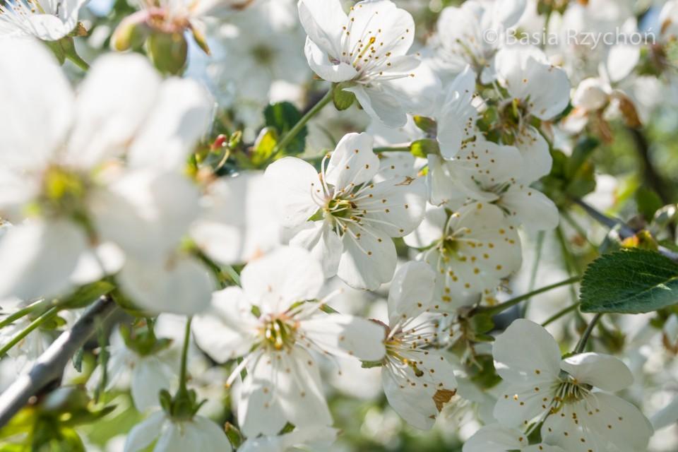 Kwiaty- inspiracje do namalowania obrazu olejnego