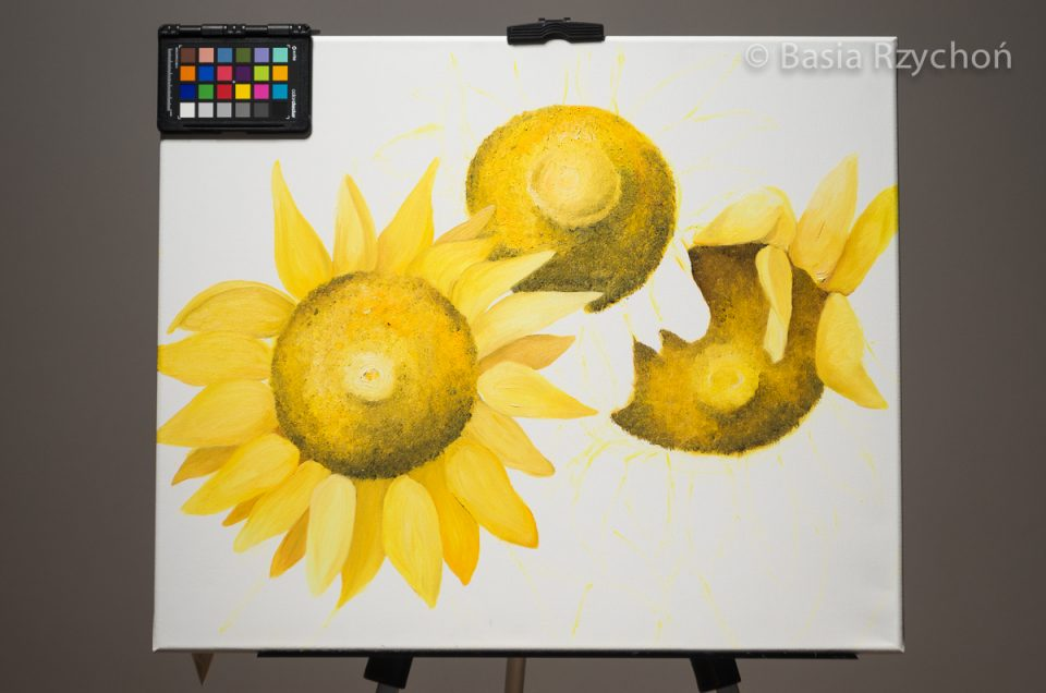 2. Pierwotny wygląd trzech kwiatów z których tylko jeden ma pełną koronę płatków.